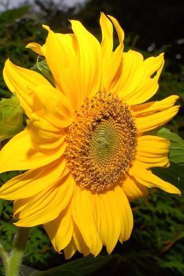 Tall Yellow Sunflower Flower Journal