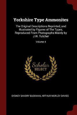 Yorkshire Type Ammonites