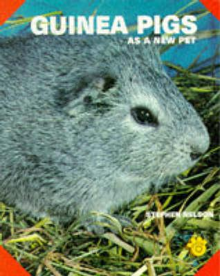 Guinea Pigs As a New Pet