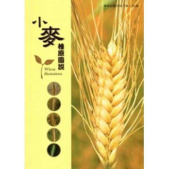 小麥種原圖說