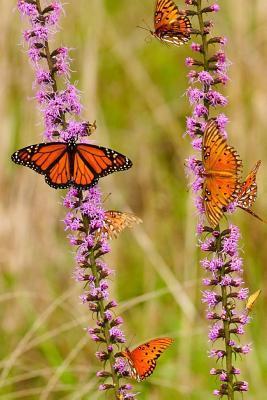 Monarch Butterflies With Purple Flowers Journal