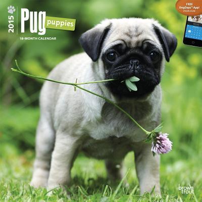 Pug Puppies 2015 18 Month Calendar