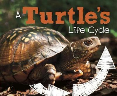 Turtle's Life Cycle