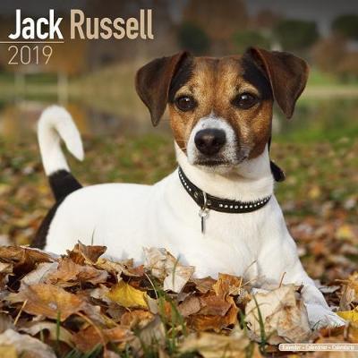 Jack Russell Calendar 2019 (Square)