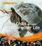 Hermit Crabs & Other Shallow Water Life