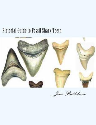 Pictorial Guide to Fossil Shark Teeth