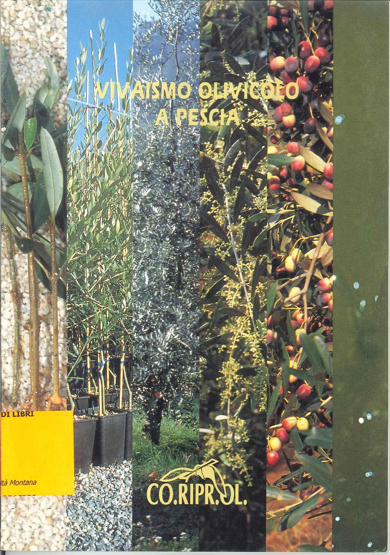 La produzione e le tendenze del vivaismo olivicolo pesciatino