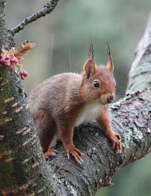 Attentive Squirrel o...