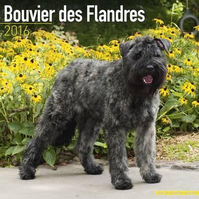 BOUVIER DES FLANDRES (EURO) 2016 Wall Calendar