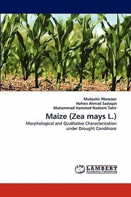 Maize (Zea mays L.)