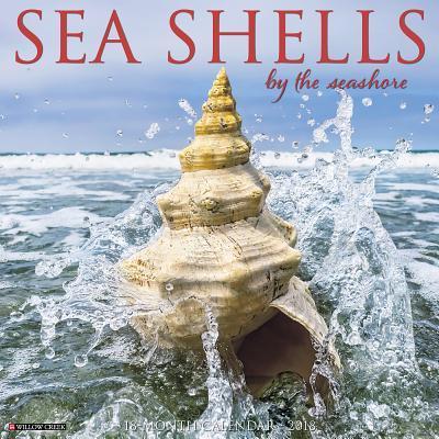 Sea Shells 2018 Calendar