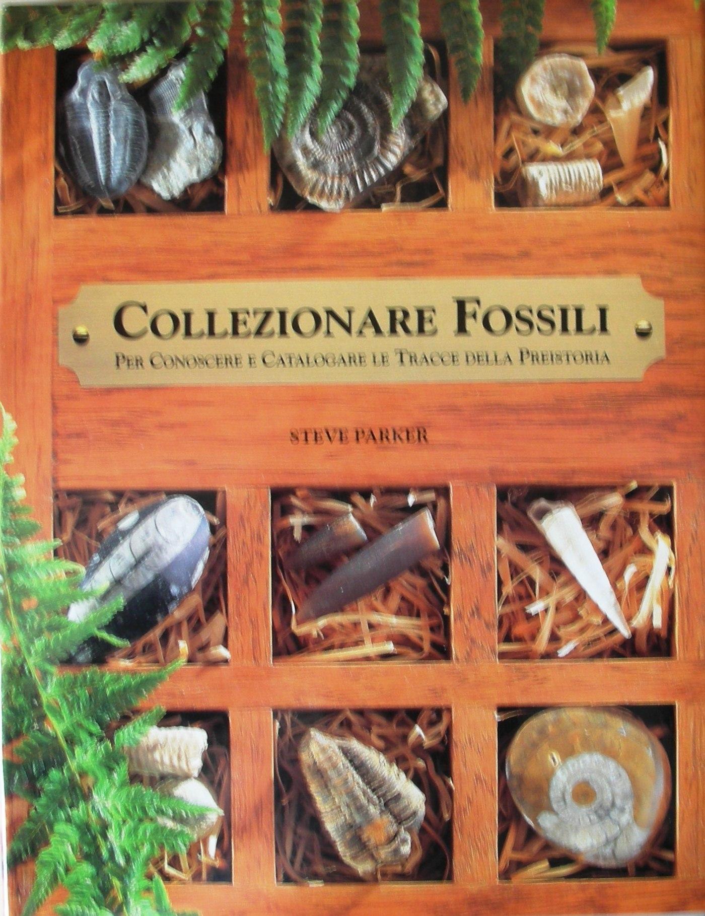 Collezionare fossili per conoscere e catalogare le tracce della preistoria