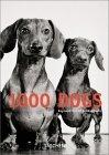 Tausend Hunde
