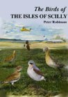 Birds of the Isles of Scilly