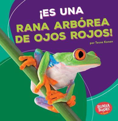 Es una rana arbórea de ojos rojos! / It's a Red-Eyed Tree Frog