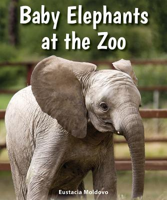 Baby Elephants at the Zoo