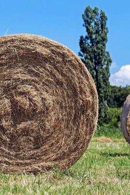 Hay Bales in the Fie...