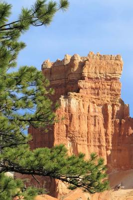 Pine Trees and Awesome Rock Formations Bryce Canyon National Park Journal