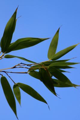 Bamboo Leaves Journa...
