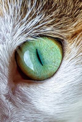 Green Cat's Eye Jour...