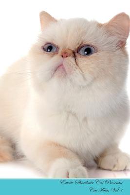 Exotic Shorthair Cat...