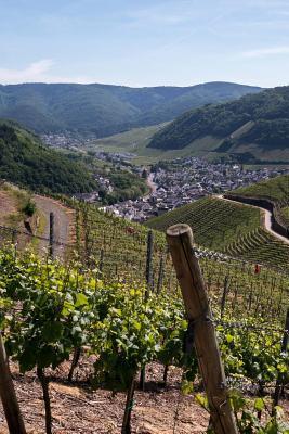 Beautiful Vineyard i...