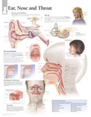 Ear, Nose & Throat C...