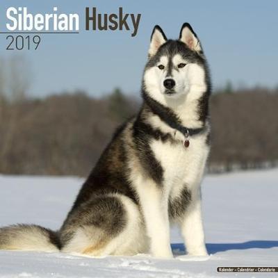 Siberian Husky Calendar 2019 (Square)