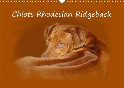 Chiots Rhodesian Ridgeback 2017