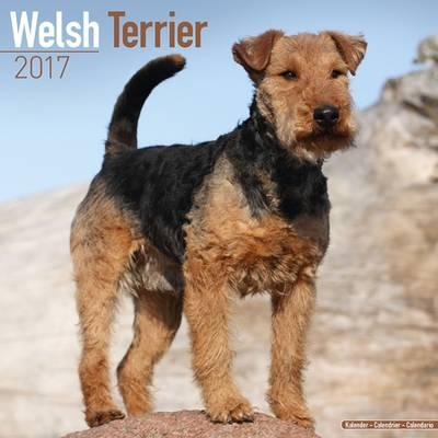 Welsh Terrier 2017