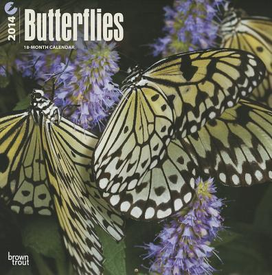 Butterflies 2014 18-Month Calendar
