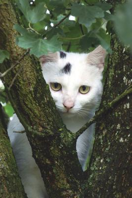 White Cat in a Tree Journal