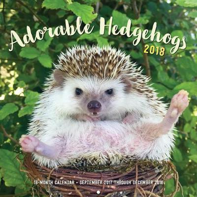 Adorable Hedgehogs 2018 Calendar