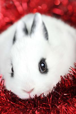 Cute White Bunny Journal