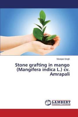 Stone grafting in mango (Mangifera indica L.) cv. Amrapali