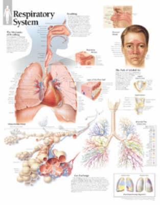 Respiratory System, ...