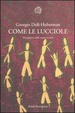 Cover of Come le lucciole