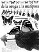 Cover of De la Oruga a la Mariposa