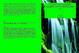 Cover of Platone nel pensiero moderno e contemporaneo