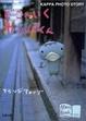Cover of どこへいくカッパくん―KAPPA PHOTO STORY