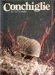 Cover of Conchiglie di tutti i mari - vol. 2