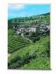 Cover of Guida ai vitigni autoctoni d'Italia - volume primo (15)