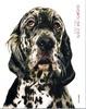Cover of Giorni da cani