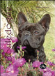 Cover of Bouledogue francese