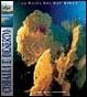Cover of Coralli e deserto