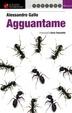 Cover of Agguantame