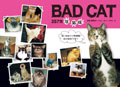 257隻壞貓咪