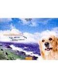 潮浪狗狗:黃金獵犬愛咪的點點滴滴