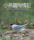 小燕鷗殉情記:小燕鷗在臺灣的繁殖情事